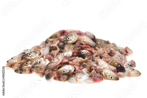 Pile of fish heads