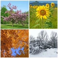 Spring, summer, autumn, winter. Four seasons.