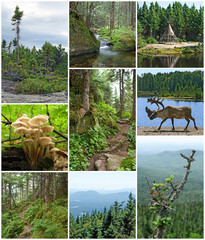 Summer beauty of Canadian forests