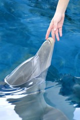 Touching a Dolphin