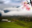 Nice landscape with sakura