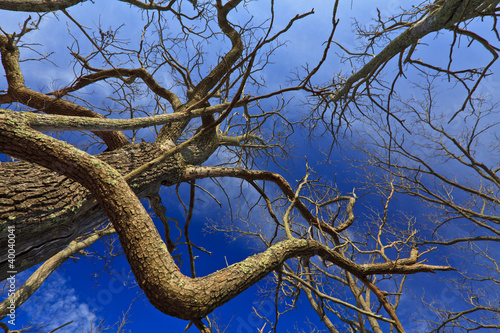Deep blue sky, stratus clouds and and trees in countryside