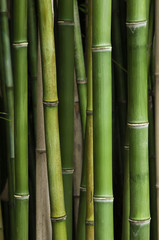 Local Bamboo forest
