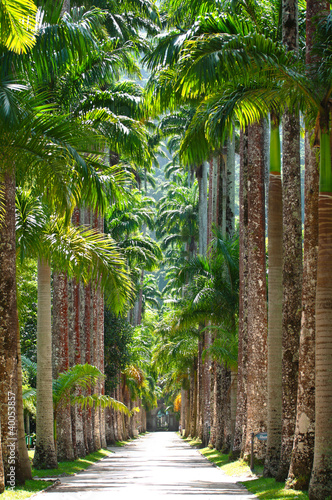 Obraz na płótnie Ogród botaniczny. Rio de Janeiro