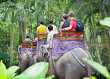 BAKAS ELEPHANT SAFARI, Bali, Indonesia - 40056061