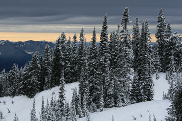 Mt. Rainier #6