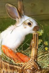 Junges Kaninchen knabbert Weidenkätzchen