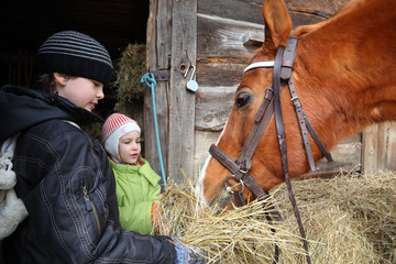 Happy brother and sister give brown horse hay; focus on horse