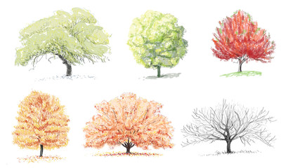 Trees - Sketches