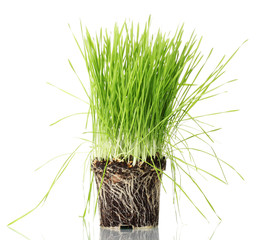 Green grass with the land isolated on white