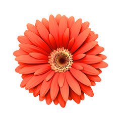 Red daisy flower isolated - 3d render