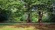 Bäume mit Wiese im Sommer