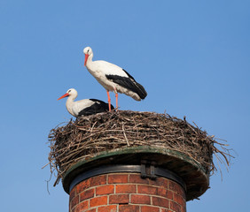 Two white storks in a nest on top of chimney