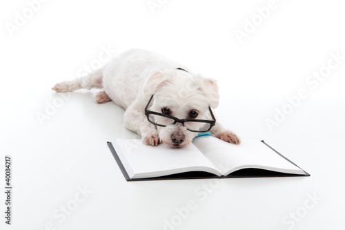 Lazy dog with head resting on book