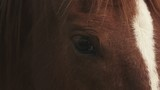 Extreme close up of horse head and eye