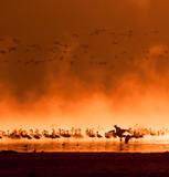 Fototapete Park - Kenya - Vögel