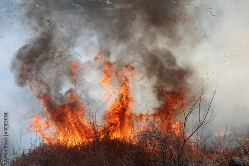 Forest Fire Flames 5