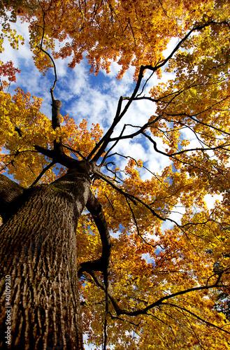 jesienia-drzewa