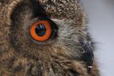 Fototapete Wald - Baum - Vögel