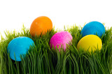 Bright colorful dyed eggs in grass poster