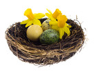 Birds nest with dyed colorful eggs and flowers poster