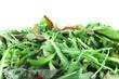 Rucola and Chard salad