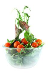 Rucola, Chard and tomatoes salad lightness concept