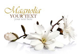 Fototapety Magnolia flowers border