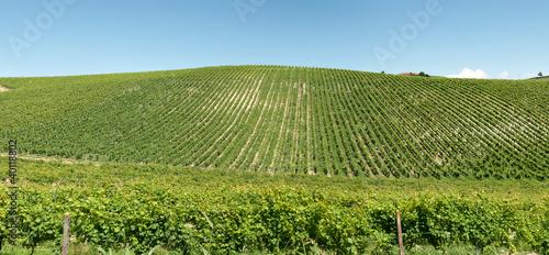 panoramica di un vigneto nelle terre del Piemonte in Italia