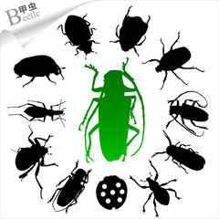 Silhouettes of insects - beetle