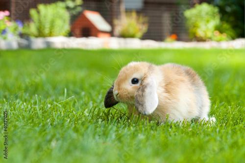 kaninchen im garten stockfotos und lizenzfreie bilder auf bild 40127025. Black Bedroom Furniture Sets. Home Design Ideas