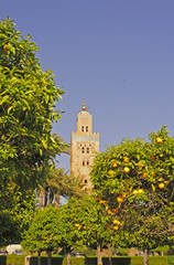 Orange trees with the mosque of Koutoubia