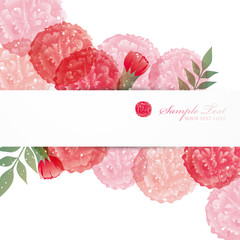 carnation background