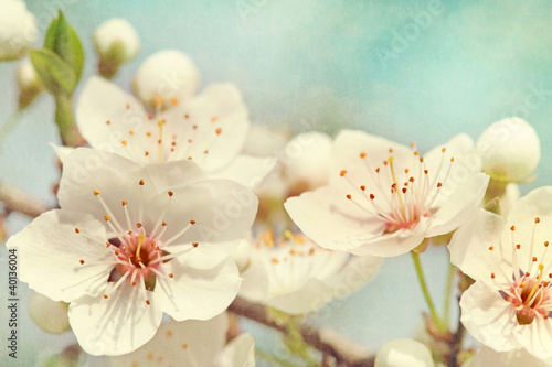Aluminium Kersen Cherry blossoms
