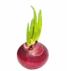 Red onion isolated on white background, with clipping path