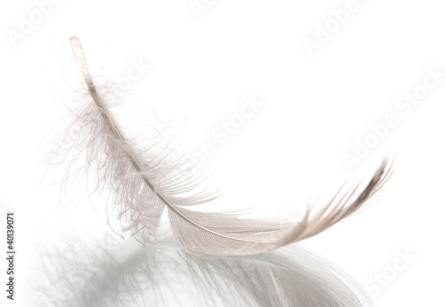 Single fluffy feather isolated on white © Africa Studio