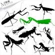 Silhouettes of insects - mantis