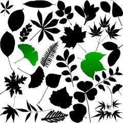Leaves silhouette
