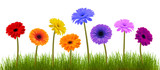 Spring flower and grass over white - 40155229