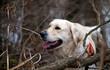 cane da ricerca