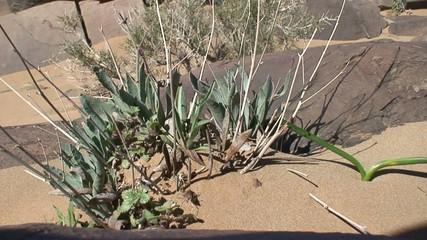 Vegetación en el desierto