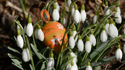 easter egg in the snowdrops and spring wind