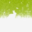 Ostern, Osterhase, Kaninchen, Gras, Blumenwiese, Kräuterwiese