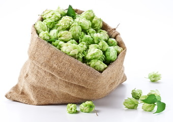 Sack of hops on a white background.