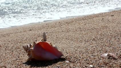 mañana de relax en la playa