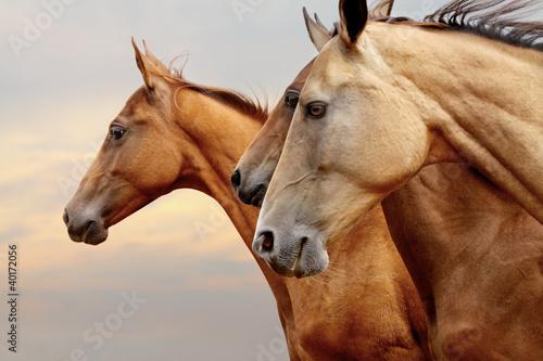 Fridge magnet horses