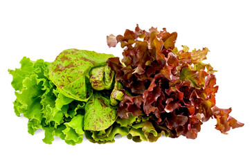 Lettuce green, spotted and red