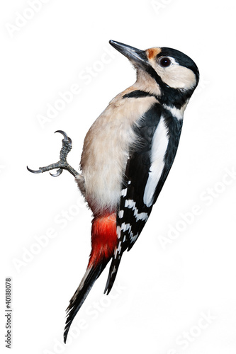 Great Spotted Woodpecker isolated on white background