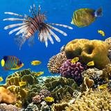 Fototapete Fisch - Ozean - Meer / Ozean