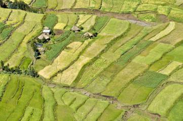 African fields